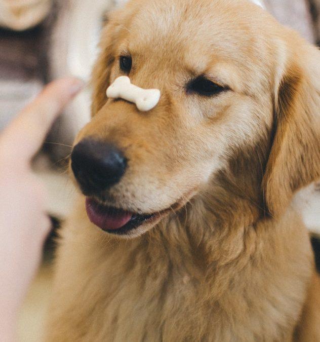 Consigue que tu perro sea obediente